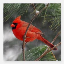 "Male Cardinal 02-02-10 3 Square Car Magnet 3"" x 3"""