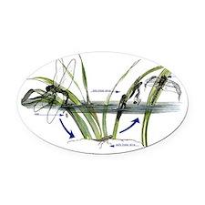 Incomplete Metamorphosis (Dragonfl Oval Car Magnet