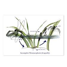 Incomplete Metamorphosis  Postcards (Package of 8)