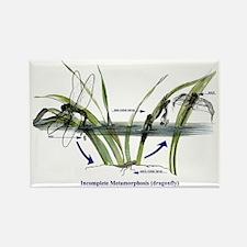 Incomplete Metamorphosis (Dragonf Rectangle Magnet