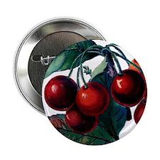 "Cherry Ripe Cherries Fruit Retro Vint 2.25"" Button"