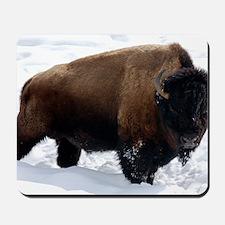 1 Bison Snow Mousepad