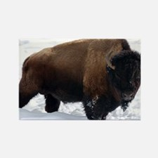 1 Bison Snow Rectangle Magnet