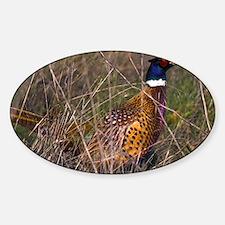 (4) Pheasant  407 Decal