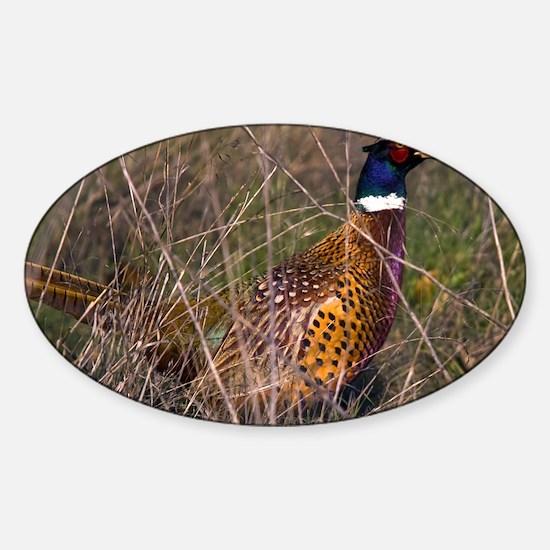 (4) Pheasant  407 Sticker (Oval)