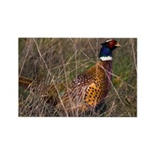 (4) Pheasant  407 Rectangle Magnet