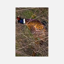 (12p) Pheasant  407 Rectangle Magnet