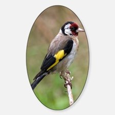 goldfinch3 Decal