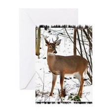 BUCK IN THE SNOW Greeting Card
