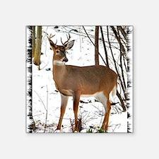 """BUCK IN THE SNOW Square Sticker 3"""" x 3"""""""