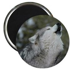 ms Christmas Wolf Magnet