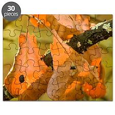 Blackjack Oak - Print Puzzle