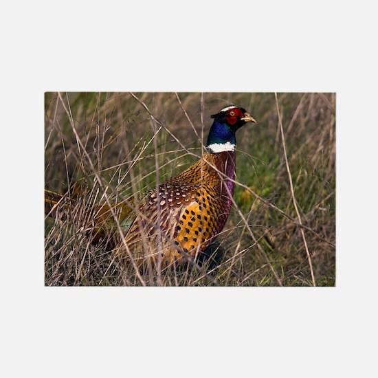 (6) Pheasant  407 Rectangle Magnet
