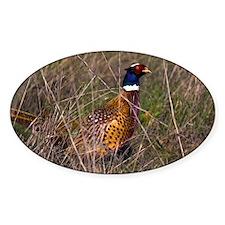 (6) Pheasant  407 Decal
