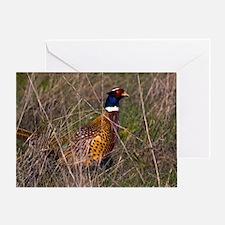 (6) Pheasant  407 Greeting Card