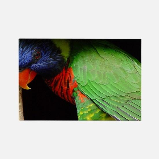 Parrot Calendar Rectangle Magnet