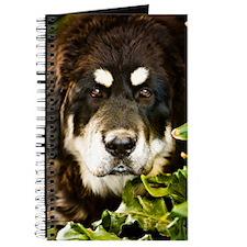tibetcandi68 Journal