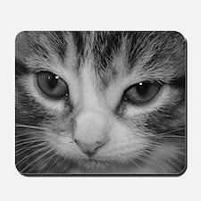 Black & White Kitten Mousepad