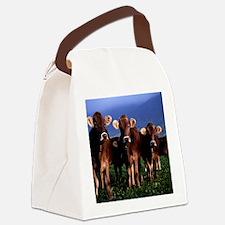 blanket11 Canvas Lunch Bag