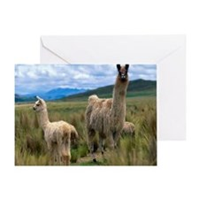 blanket15 Greeting Card