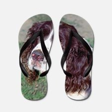 (12p) Spaniel Flip Flops