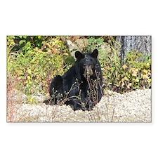Autumn Bear Daze Decal
