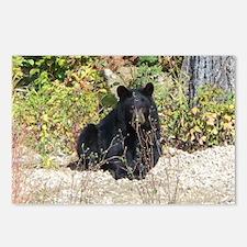 Autumn Bear Daze Postcards (Package of 8)