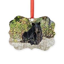 Autumn Bear Daze Ornament