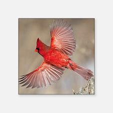 "Male cardinal Square Sticker 3"" x 3"""