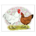 White Red Chickens Small Poster