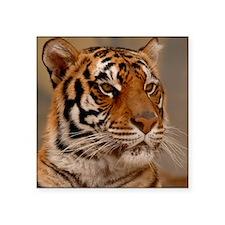 """x10 Tiger II Square Sticker 3"""" x 3"""""""