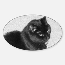 2010_1118Image0029-aa-full sat. - s Sticker (Oval)