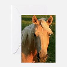 palimino horse 16x20 Greeting Card