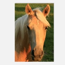 palimino horse 16x20 Postcards (Package of 8)