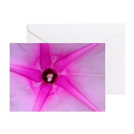 Morning Glory Greeting Cards (Pk of 10)