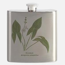 Arrowhead Plant Flask