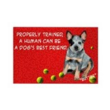 Australian cattle dogs Single