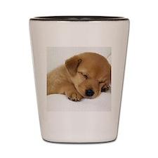 Dog-Tired-31 Shot Glass