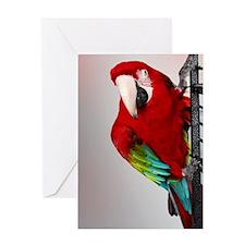 bigredIMG_8201 Greeting Card