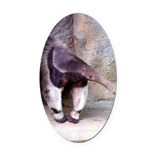(13) Giant Anteater Front Oval Car Magnet