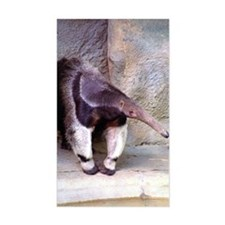 (13) Giant Anteater Front Decal