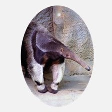 (13) Giant Anteater Front Oval Ornament