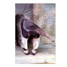 (13) Giant Anteater Front Postcards (Package of 8)