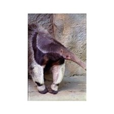 (13) Giant Anteater Front Rectangle Magnet
