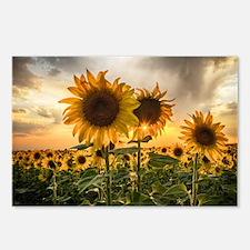 Sunflower Starburst Postcards (Package of 8)