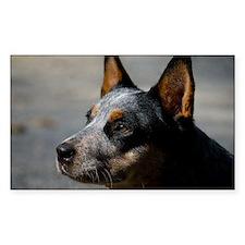 Australian Cattle Dog Decal