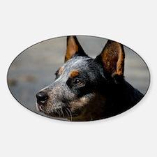Australian Cattle Dog Sticker (Oval)