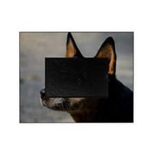Australian Cattle Dog Picture Frame
