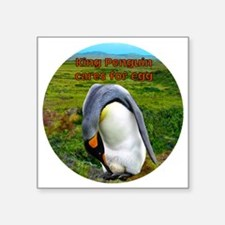 "King Penguin cares for egg  Square Sticker 3"" x 3"""