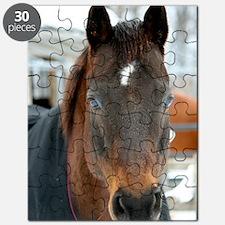 quarter horse Puzzle